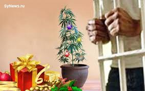 Немец перепутал куст марихуаны с елкой