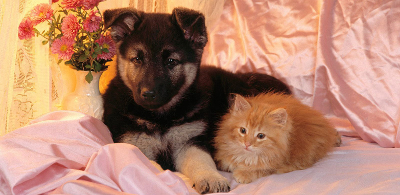Тамбовчан приглашают на выставку котят и щенят