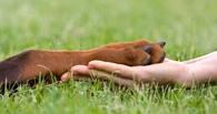 Народная новость: убитые собаки на улице