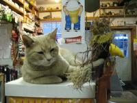 На Аляске мэром города служит кот