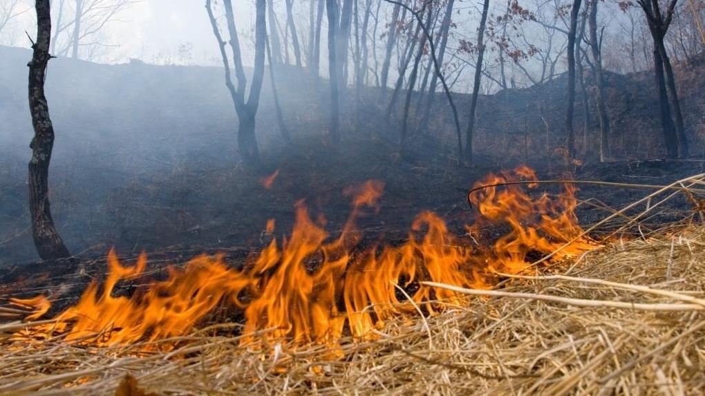 В Тамбовской области установлен особый противопожарный режим