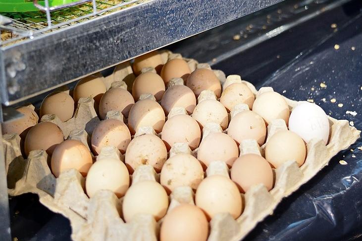 Правительство планирует ограничить цены на сахар, капусту и яйца