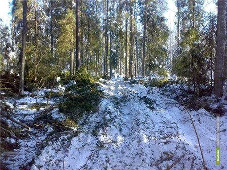 На Тамбовщине подвели итоги операции «Лесовоз»