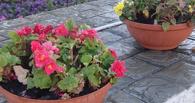 В Тамбове посадят свыше трех миллионов цветов