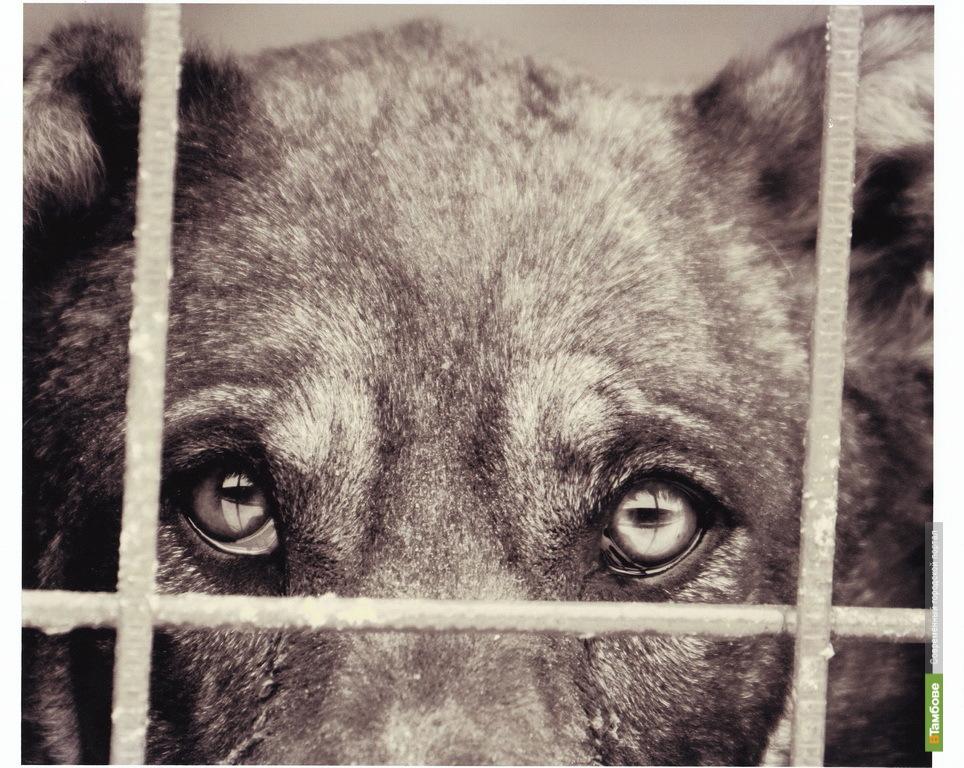 """Тамбовский чиновник """"размазал по трассе"""" бездомного пса"""