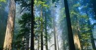Памятка тем, кто потерялся в лесу