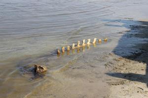 Тамбовскому краеведческому музею подарят кости мамонта