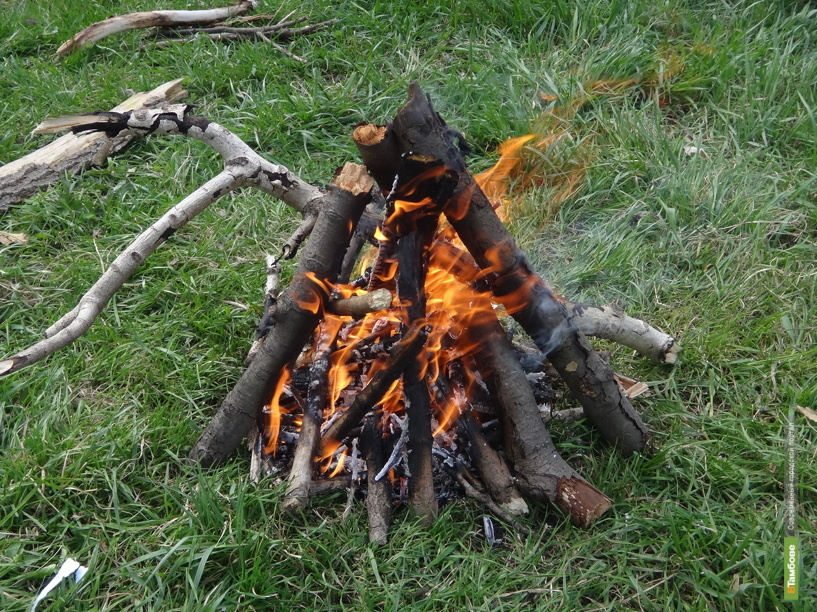 В тамбовских лесах запретили жечь костры