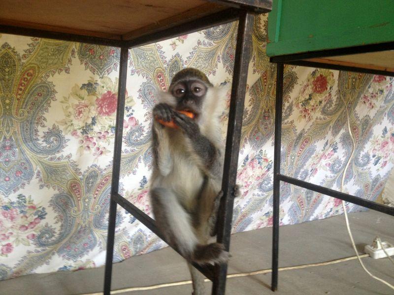 Впервые в Тамбове: «Дом обезьян и рептилий»
