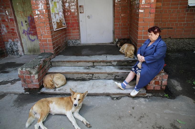 Дорогие псы: депутаты хотят ввести налог на домашних собак