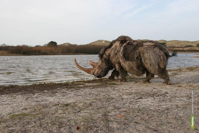 В Тамбовском карьере нашли шерстистого носорога