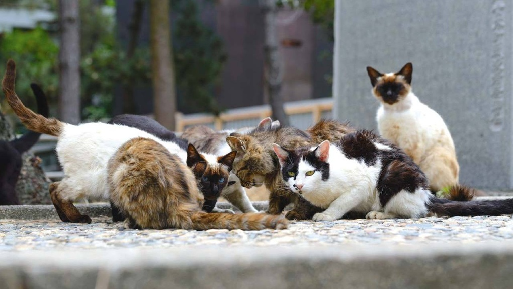 Хоррор в Мичуринске: горожан атакуют агрессивные кошки