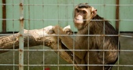 В Державинском зоопарке появился павильон экзотических животных