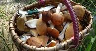 С начала года грибами отравились 22 человека