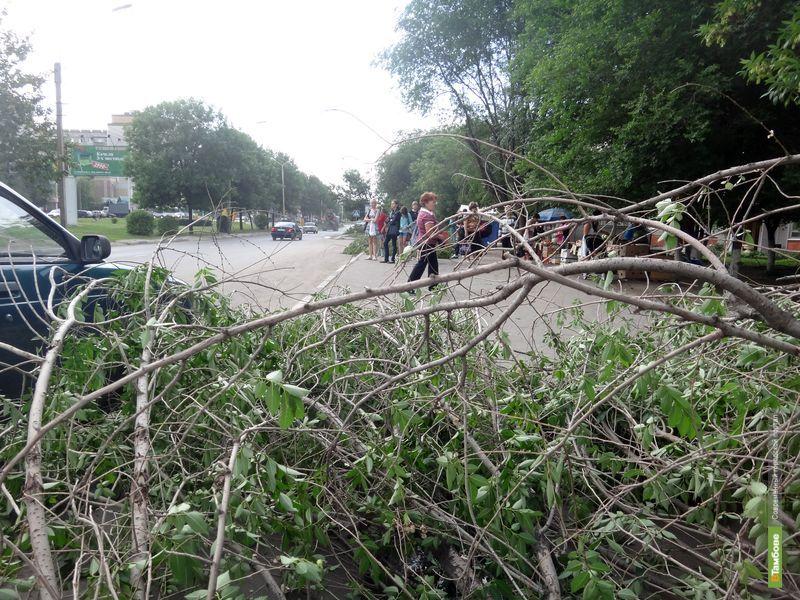 Улицу Рылеева завалило ветками