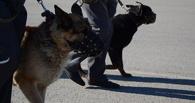 Жителя Мичуринского района задержали за торговлю наркотиками