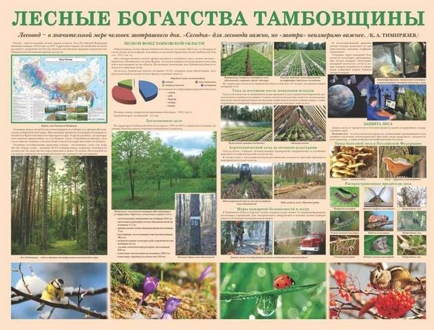 На Тамбовщине создаются кабинеты школьных лесничеств