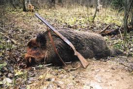 Добычу тамбовских охотников проверят на африканскую чуму