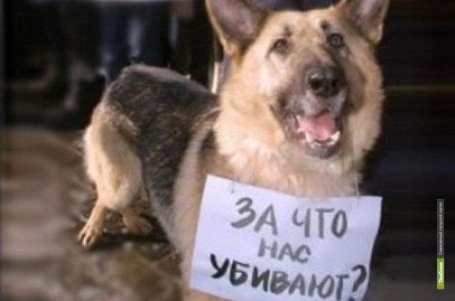 Житель Притамбовья пожаловался на специалистов по отлову животных