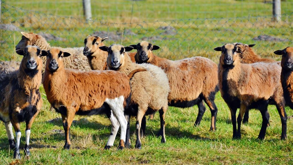 Вирус бешенства распространяется стремительно: уже страдает домашний скот
