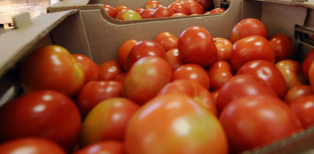 Россельхознадзор изъял и уничтожил в Тамбове 215 килограммов томатов