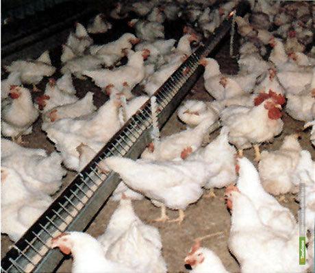 На Тамбовщине появится новый мясоперерабатывающий завод