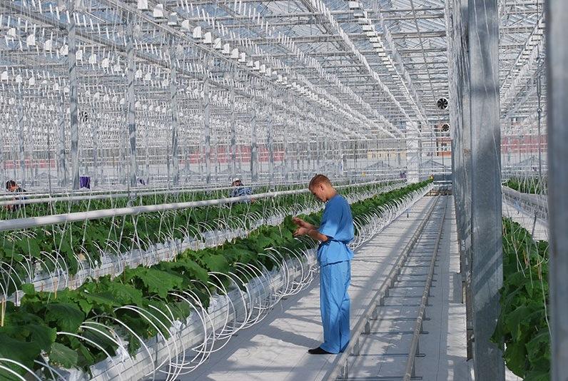 При финансовой поддержке Центрально-Черноземного банка ООО СХП «Теплицы Белогорья» нарастили производственные мощности