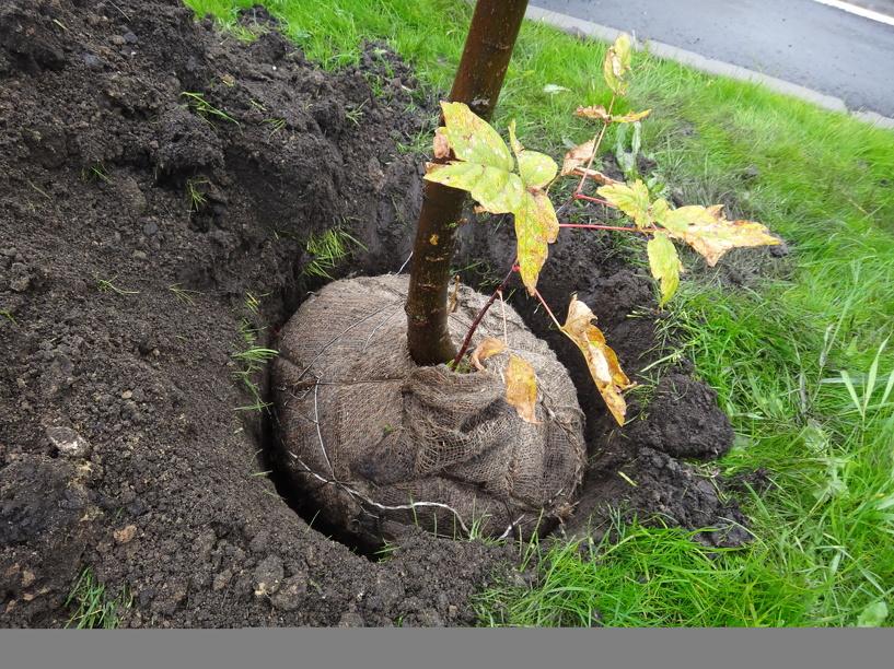 В Тамбовской области сажают новый лес