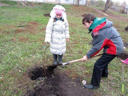 Сто «Деревьев в память о друге» посадят в Тамбове
