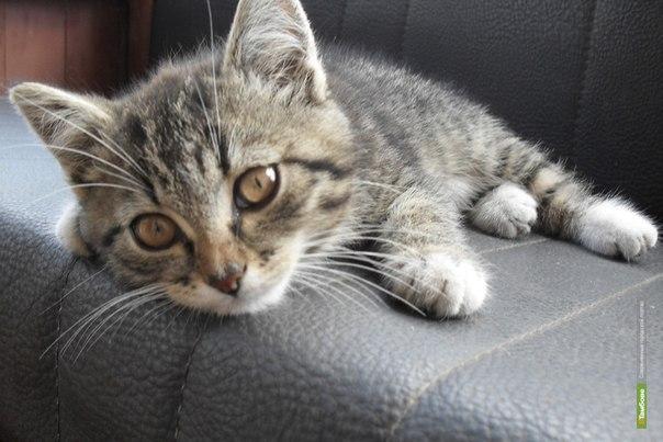 На Тамбовщине реализуют подростковый соцпроект по защите животных