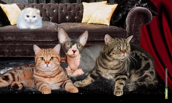 В Тамбове пройдет Международная выставка кошек