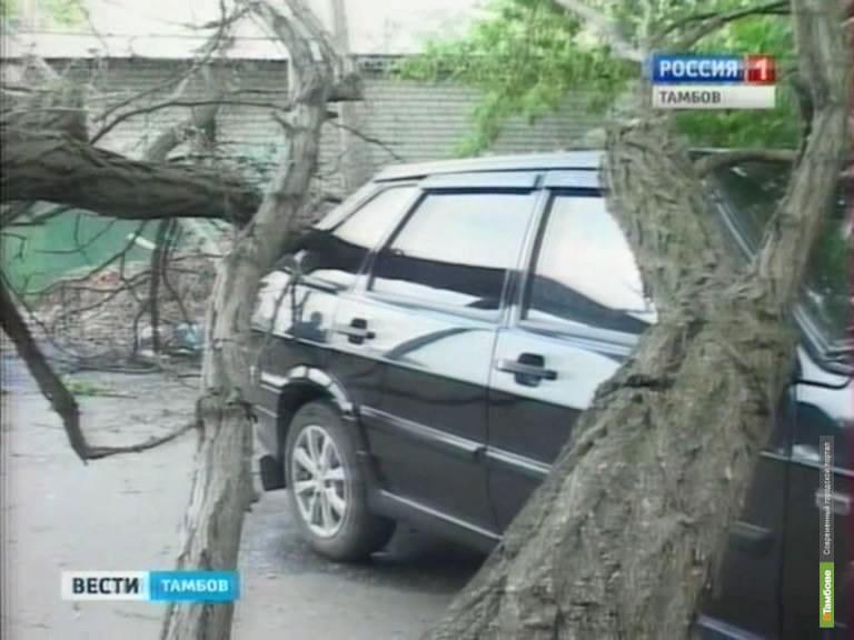 В Тамбове сухое дерево упало на два автомобиля