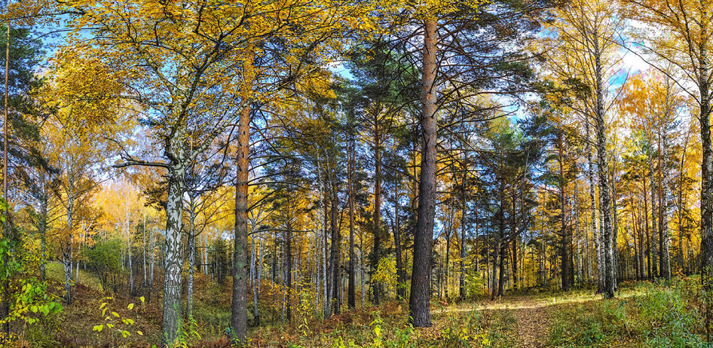Пошли в лес за грибами, прихватите и мусор: флешмоб чистоты для тамбовчан