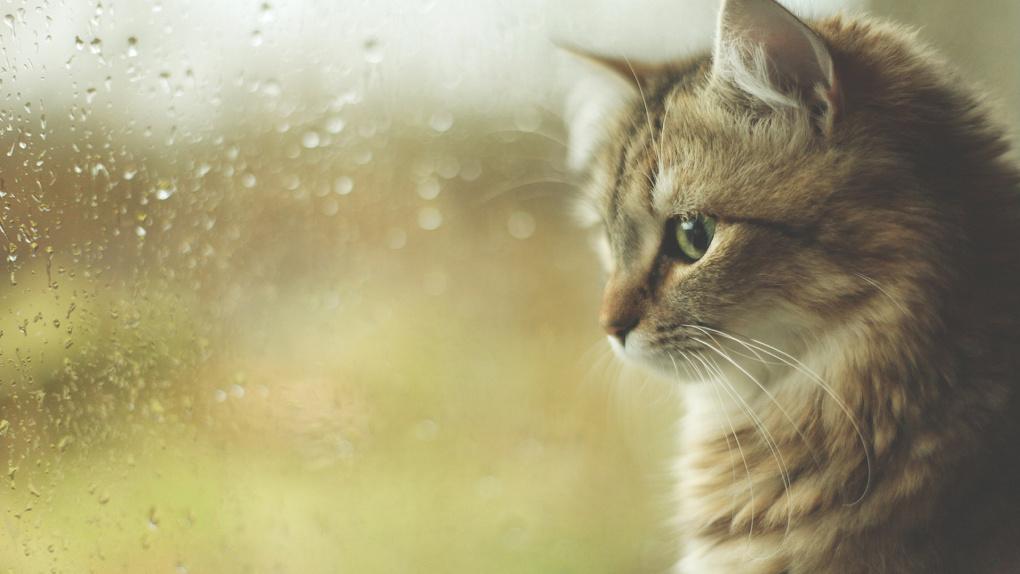 Жителей Тамбовщины на этой неделе ждёт пасмурная погода