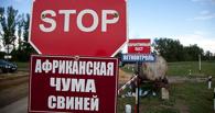 В Тамбовской области зафиксирована вспышка АЧС