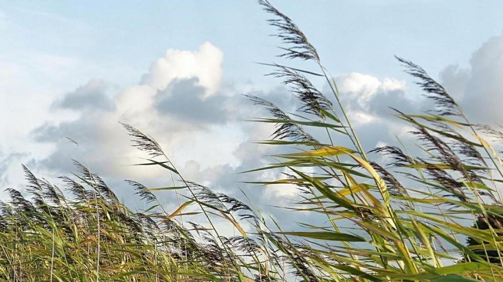 Экстренное предупреждение: в Тамбовской области ожидается усиление ветра