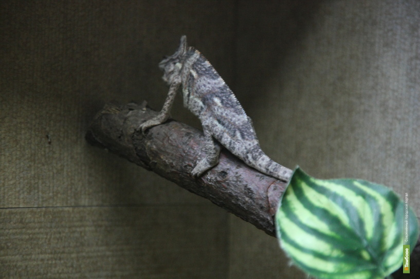 В экзотариуме державинского зоопарка поселились Шрек и Фиона