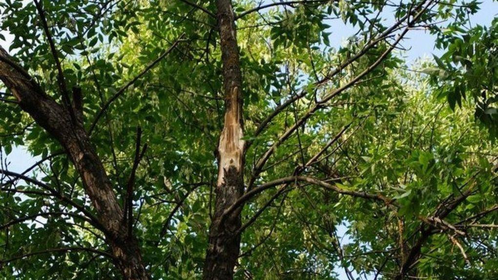 Из-за сильного урагана в Тамбове попадали деревья и провода