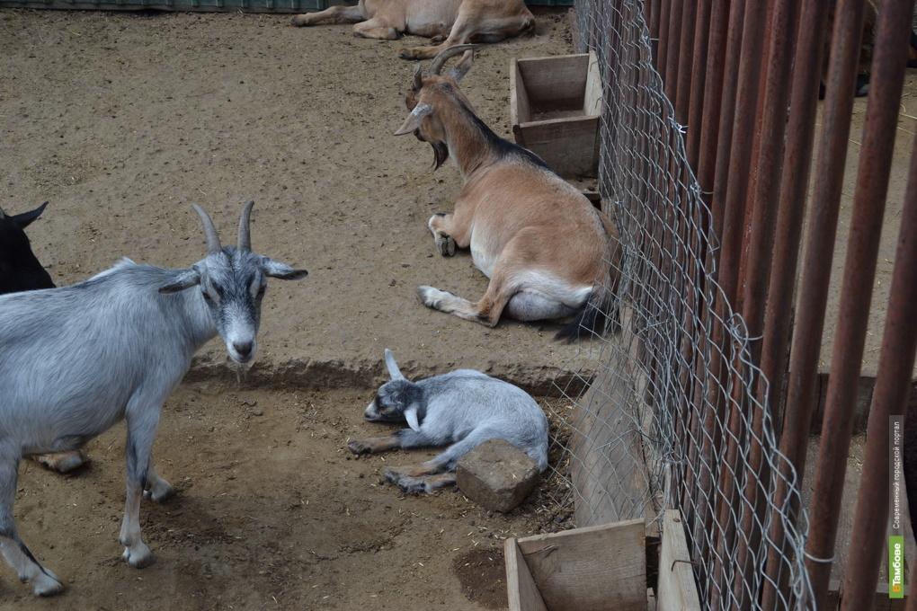 В Державинском зоопарке снова пополнение