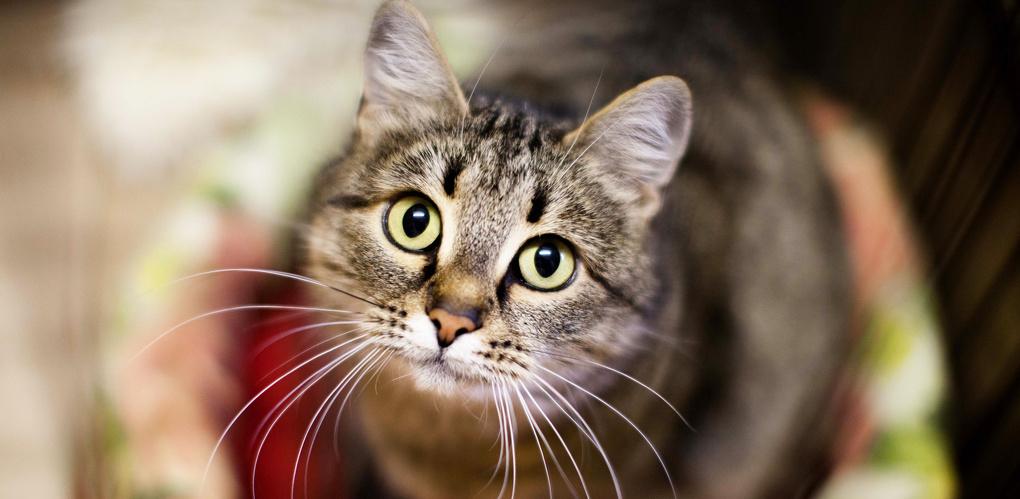 Возьми из приюта: две очаровательные кошки, заряженные на уют в доме