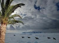 Ученые: на побережье Антарктиды раньше росли пальмы