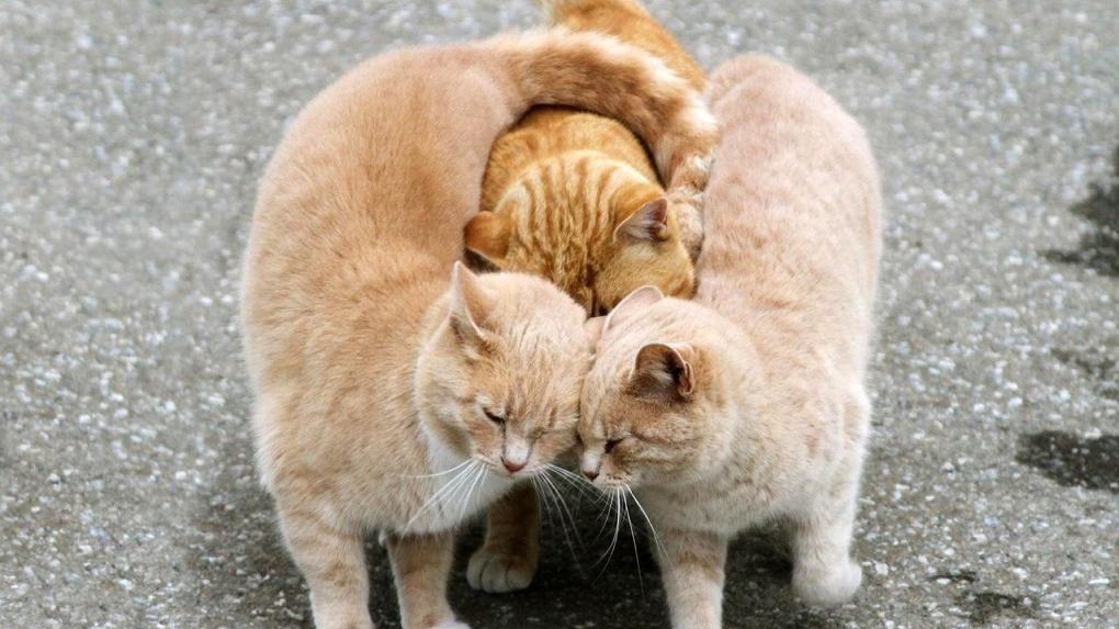 Котик, кот и кошка: Яндекс составил ТОП запросов, связанных с домашними питомцами
