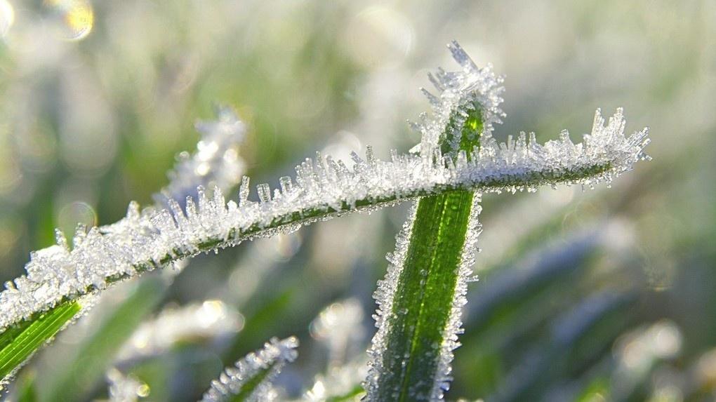 Первые две ночи лета стали самыми холодными в Тамбове за последние сто лет