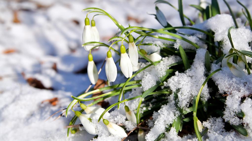 Синоптики обещают аномально теплый март
