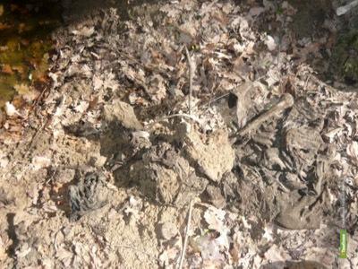 В тамбовском лесу нашли останки военнопленных иностранцев