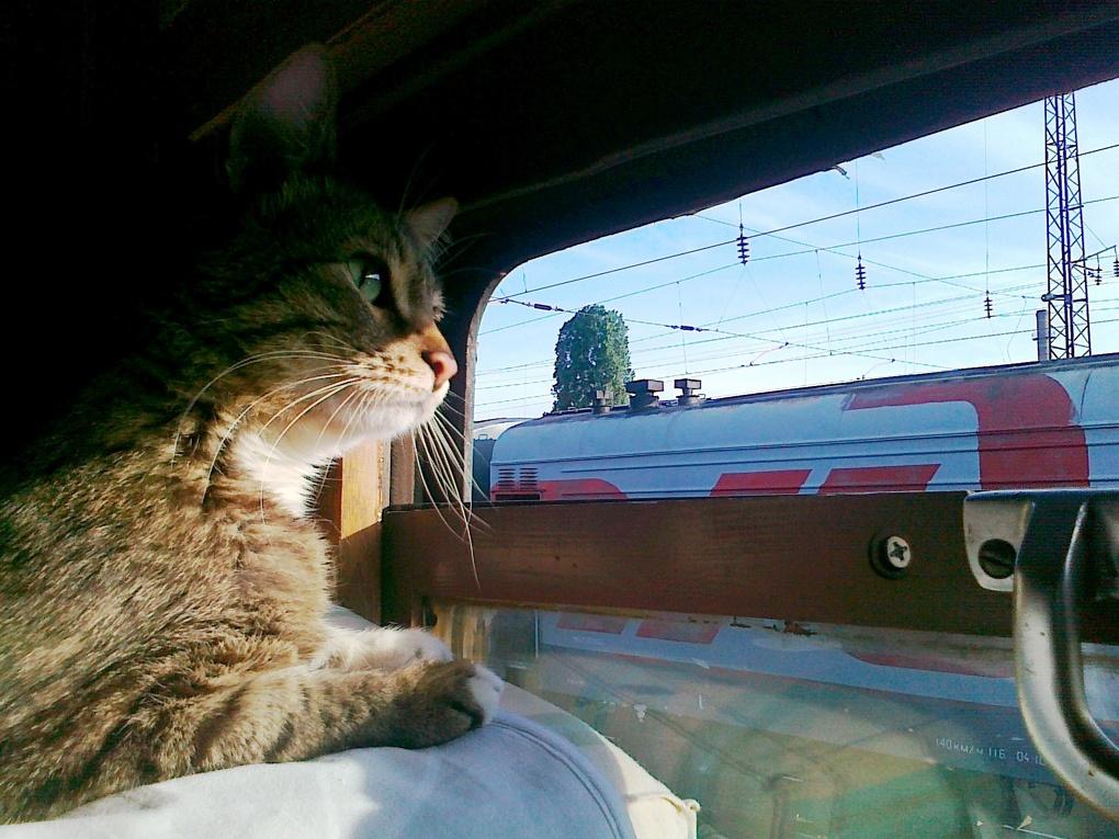 Прикольные картинки в поезде