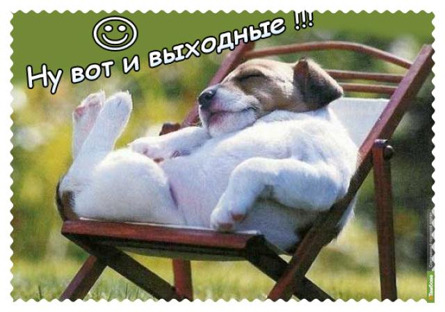Выходные с ВТамбове.ру: столичный поэт и мартовские коты