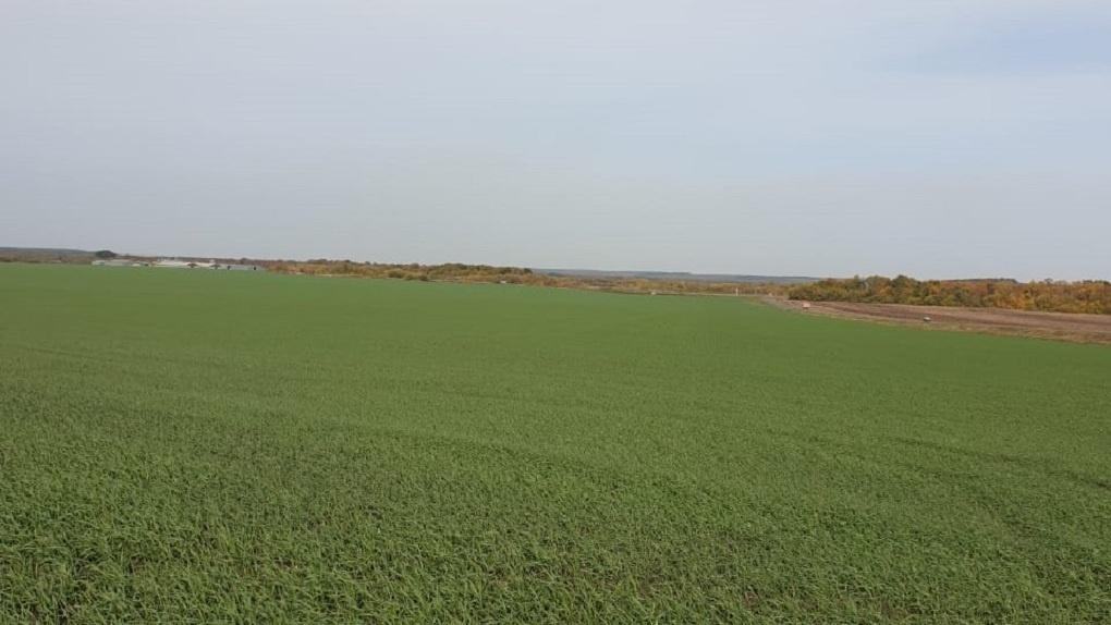 240 миллионов рублей выплат получили аграрии области в первом полугодии 2021 года