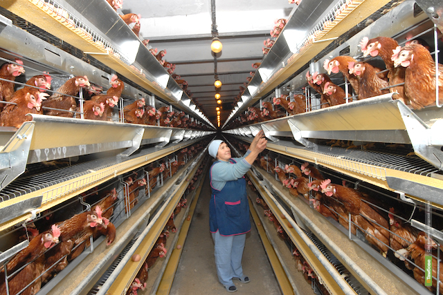 В Токаревском районе построят птицефабрику за 9 миллиардов рублей