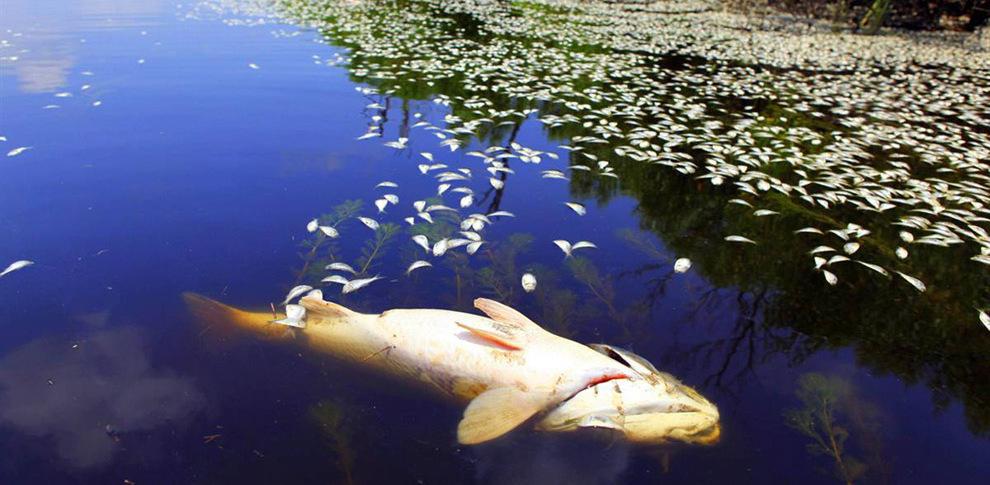 Следователи возбудили уголовное дело по факту загрязнения Цны и гибели рыбы